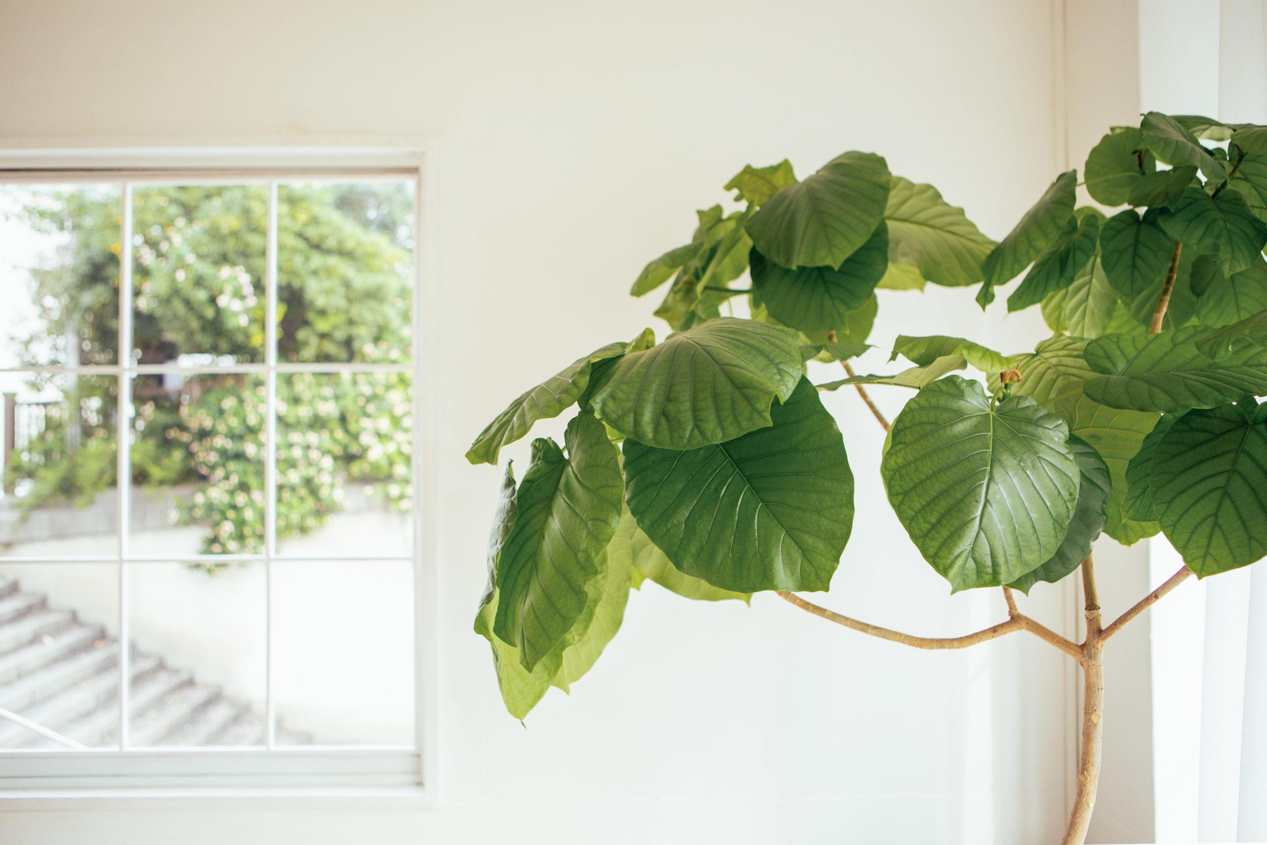 風水師のおススメする観葉植物で、自宅をパワースポットに♪