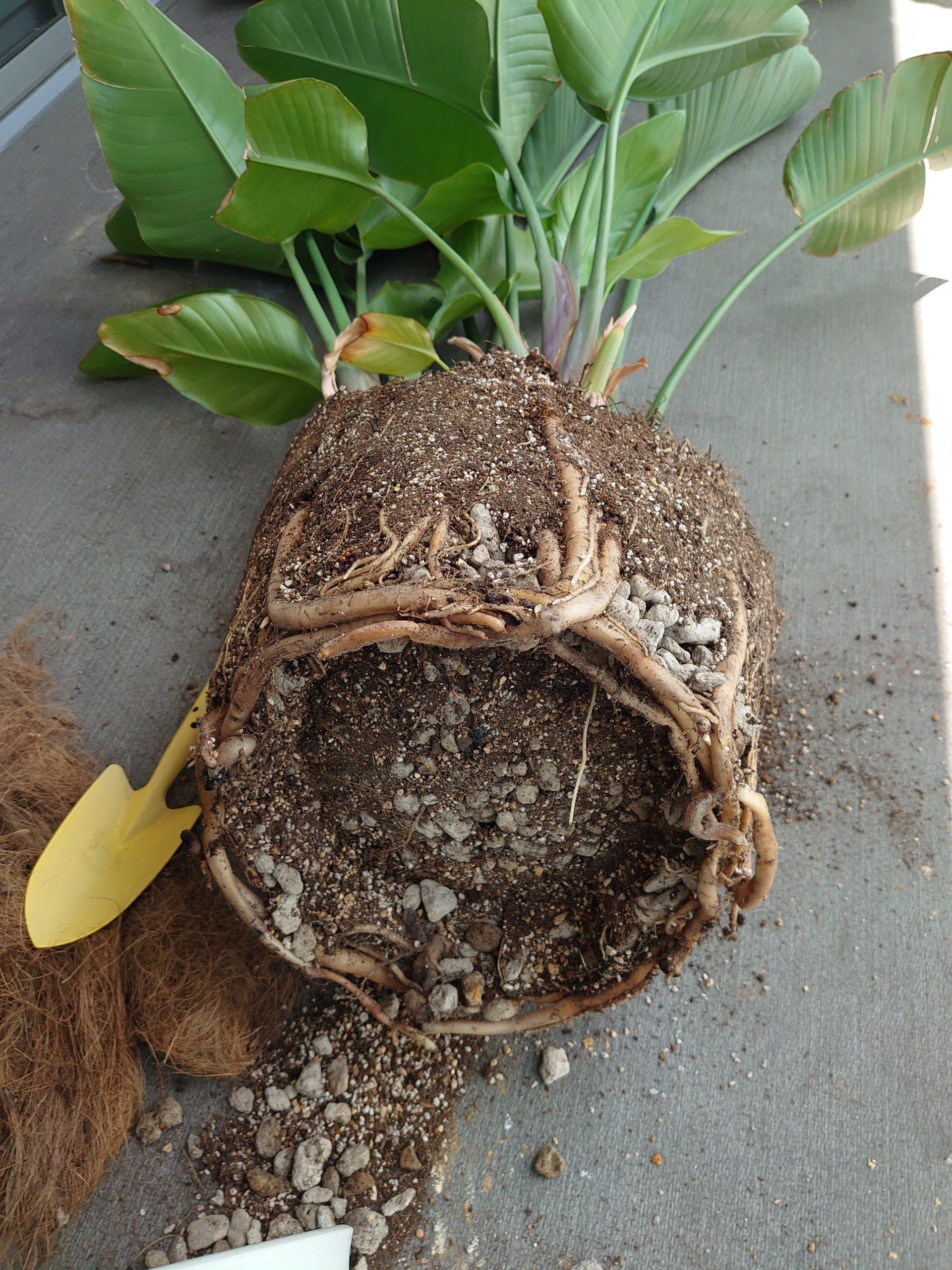 観葉植物で気の有無を風水チェック~植え替えで人生の器も大きく~