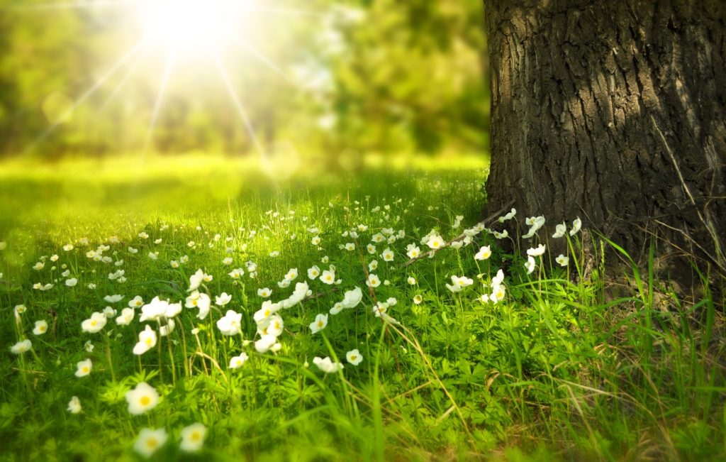 夏から秋へ向かう開運のカギは春にある!~春の養生3つのポイント~