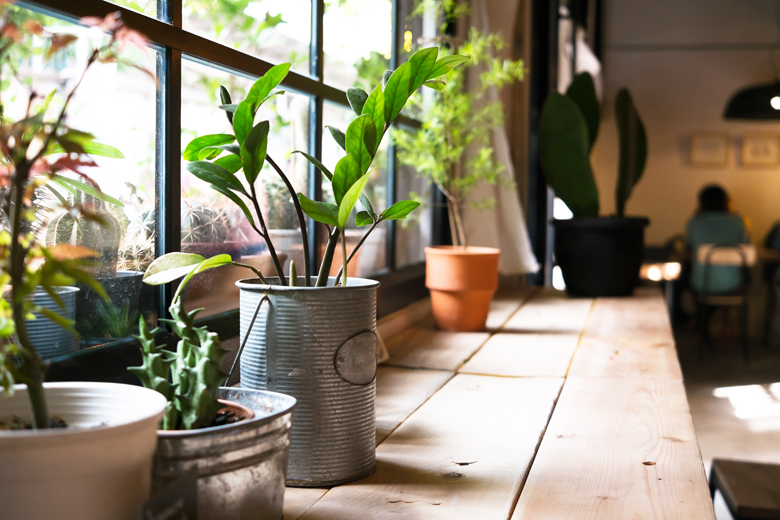 観葉植物の力で運気アップ!風水に良いおすすめの観葉植物を徹底解説